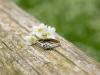 sesja-narzeczeńska-pierścionek-zaręczynowy-fotograf-bapacifoto